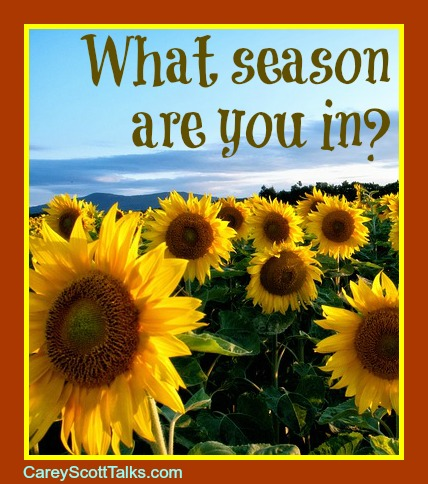What's Your Season?